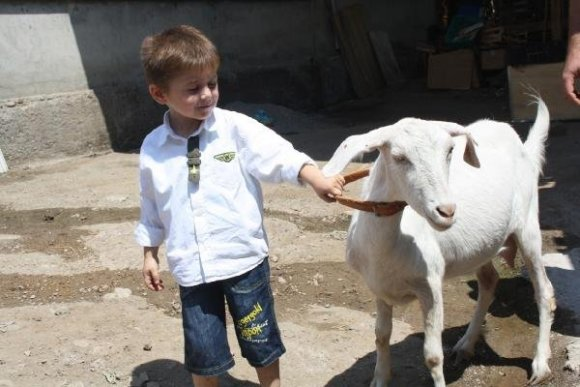 Evin bahçesinde beslenen keçiye zabıta şoku