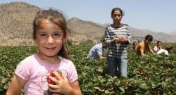 Çözüm süreciyle köylerine dönenler, çilek üretimine başladı!